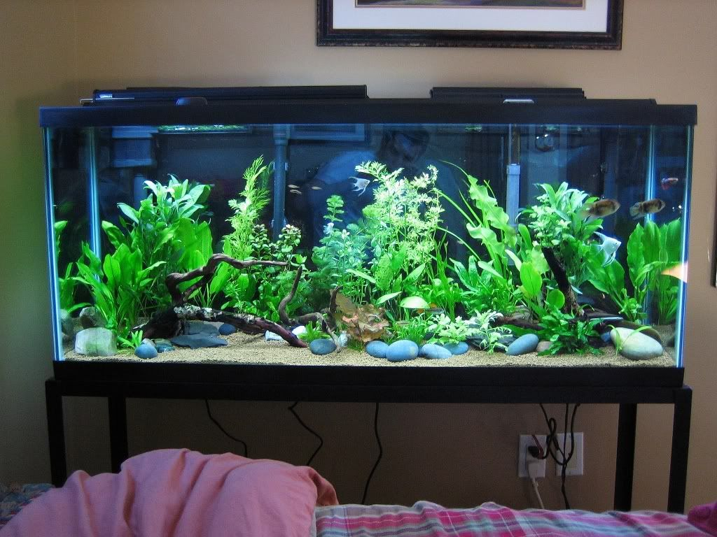 Cool Aquariums For Sale Best 20 55 Gallon Tank Ideas On Pinterest 55 Gallon Aquarium