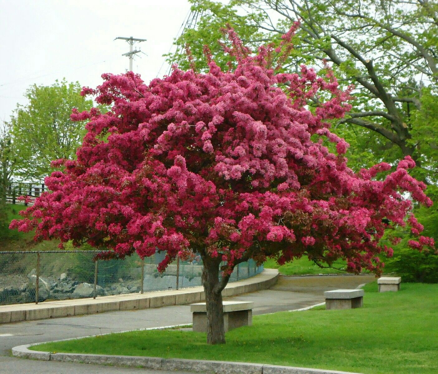 Alberi Nani Da Giardino pin di clara camatel su gardening | alberi in fiore