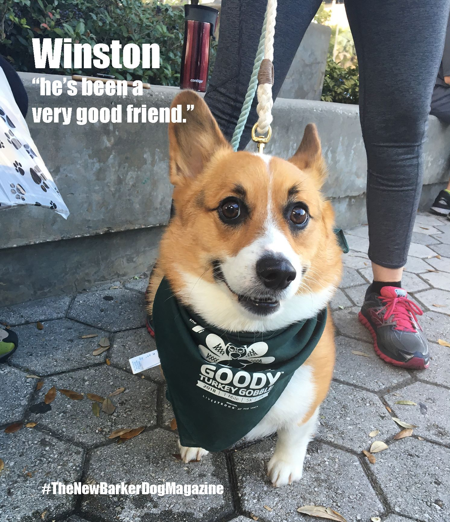 We Kicked Off Our Thanksgiving Day At The 2018 Goody Goody Turkey Gobble An 8k 5k And 1 Mile Walk Outside Amalie Arena Great Weather Dog Friends Dogs Corgi
