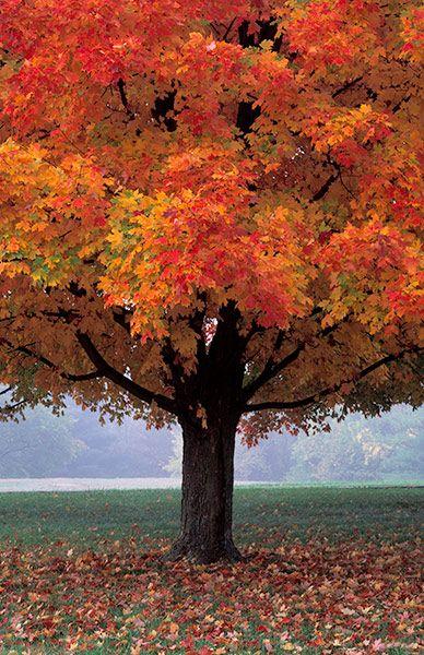 Henry Domke Www Henrydomke Com Paisaje De Otoño Fotografía De árboles Arboles De Colores