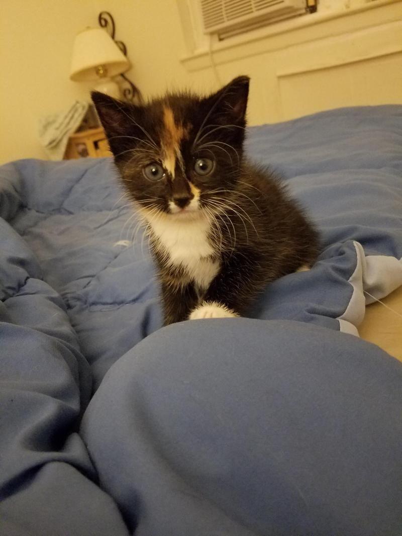 Adopt Smorshmallow On Petfinder Kitten Adoption Pets Cat Adoption