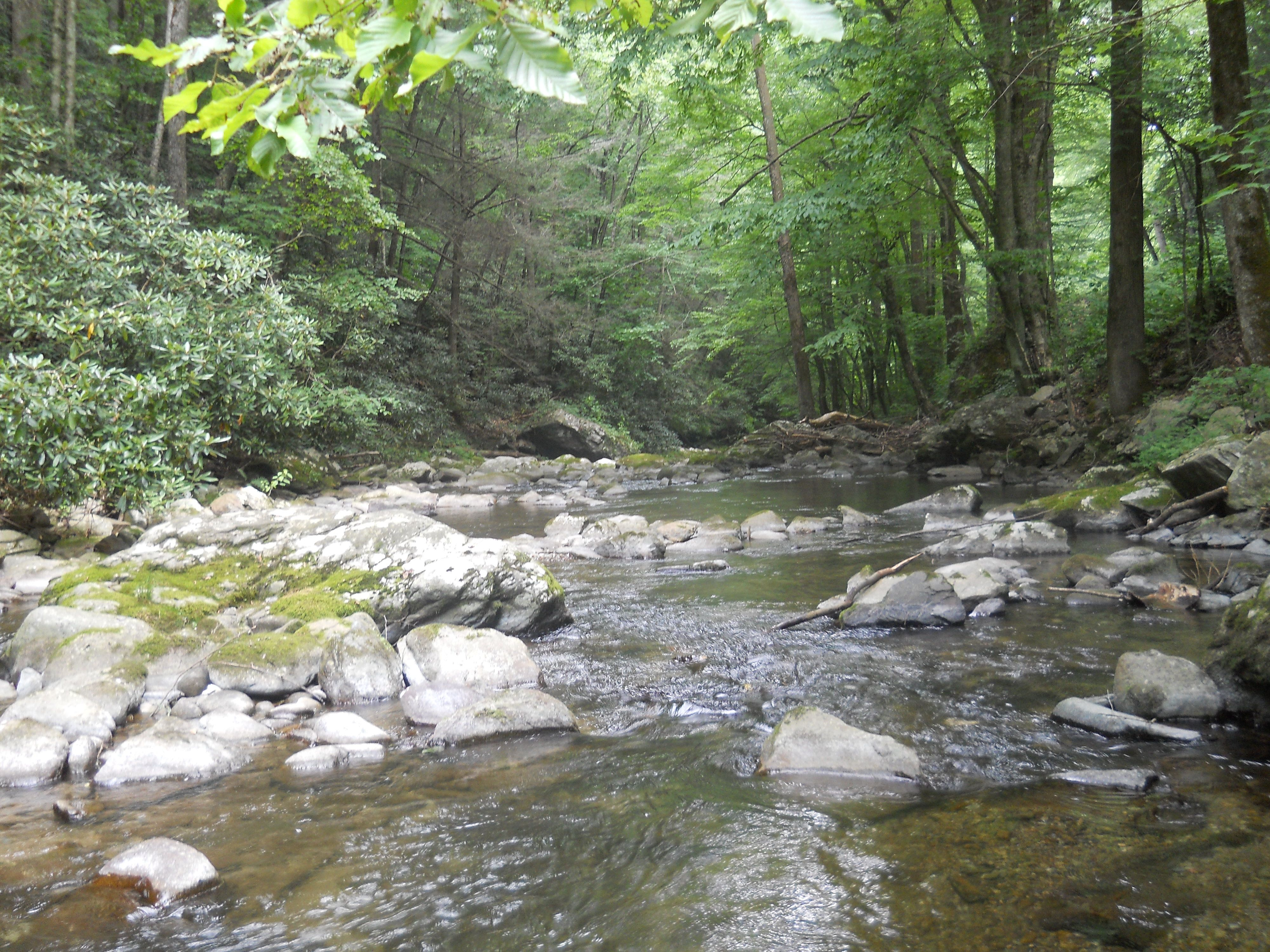 Abrams falls hike at smoky mountain national forest tn
