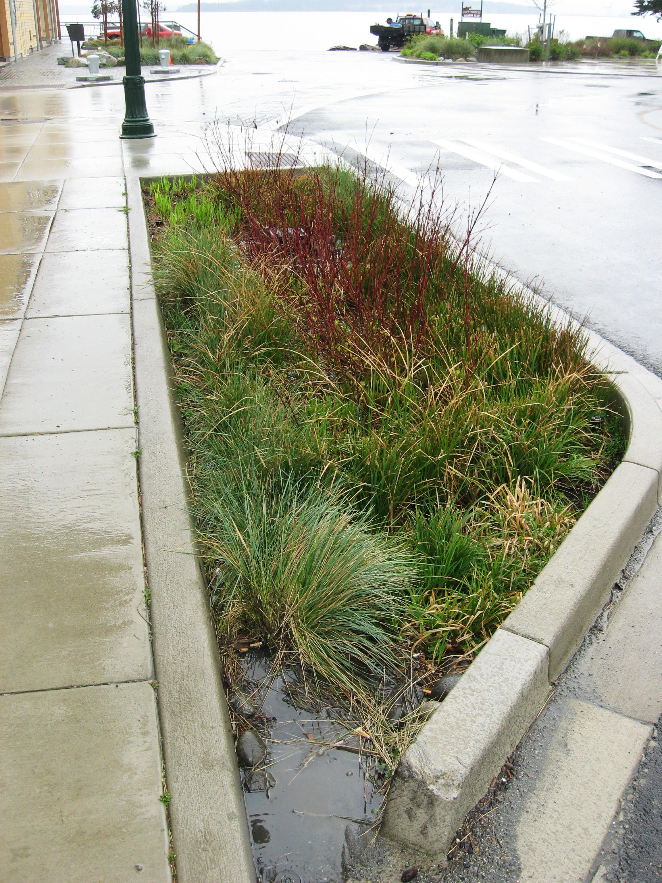 Can You Have A Rain Garden Without Rain?