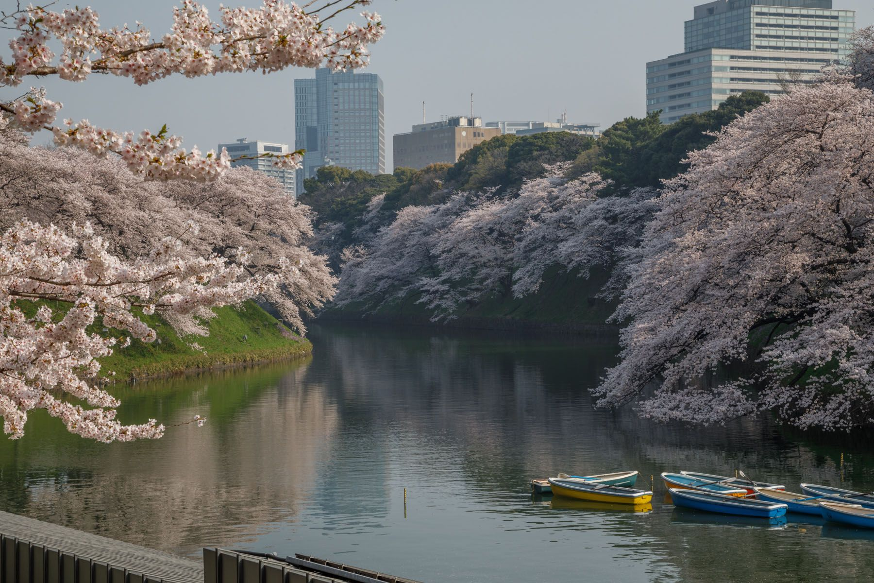 Instagrammable Spots In Japan 7 Gorgeous Spots For Cherry Blossoms In Japan Cool Places To Visit Places To Travel Spring Trip