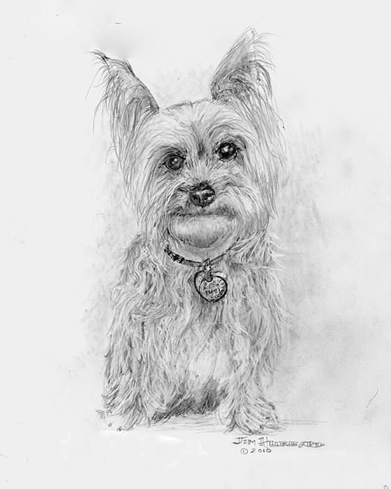 Yorkshire Terrier By Jim Hubbard Dog Clip Art Puppy