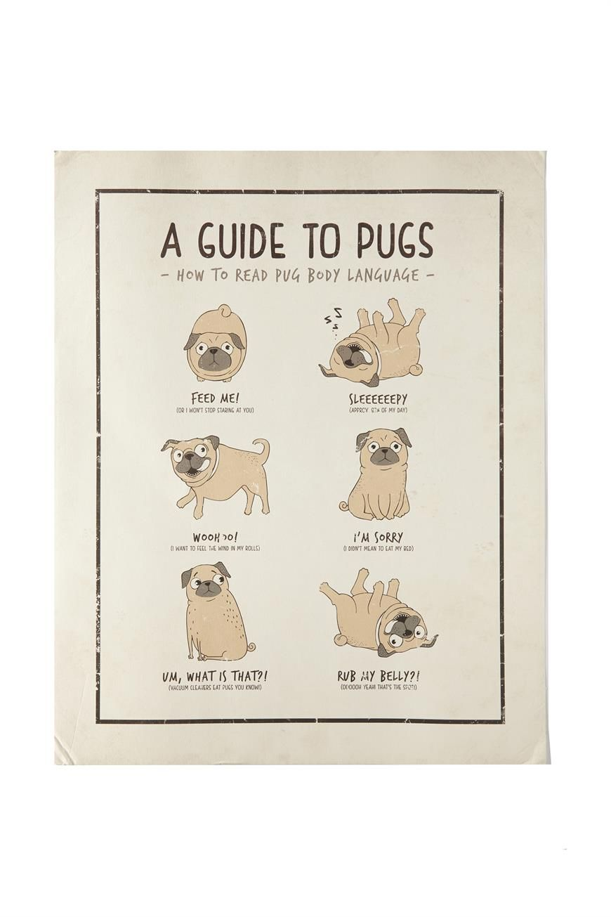 Poster 40x50 Guide To Pugs Poster Typo Pugs