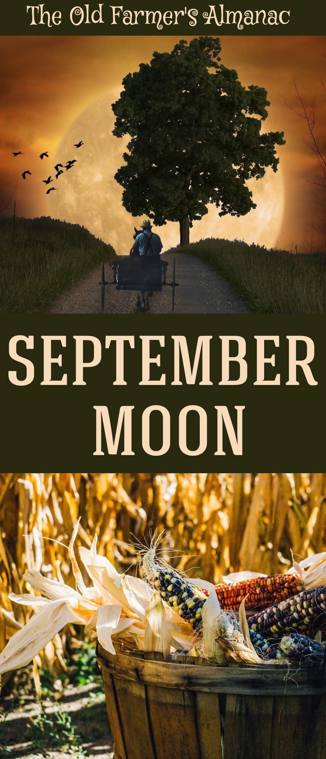 Full Moon for September 2018   Gardens