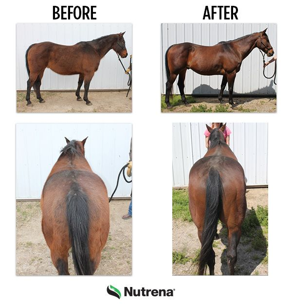 How to Take a Photo of Your Horse's Topline – The Feed Room