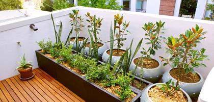 Los cultivos más eficientes para una huerta urbana | eHow en Español