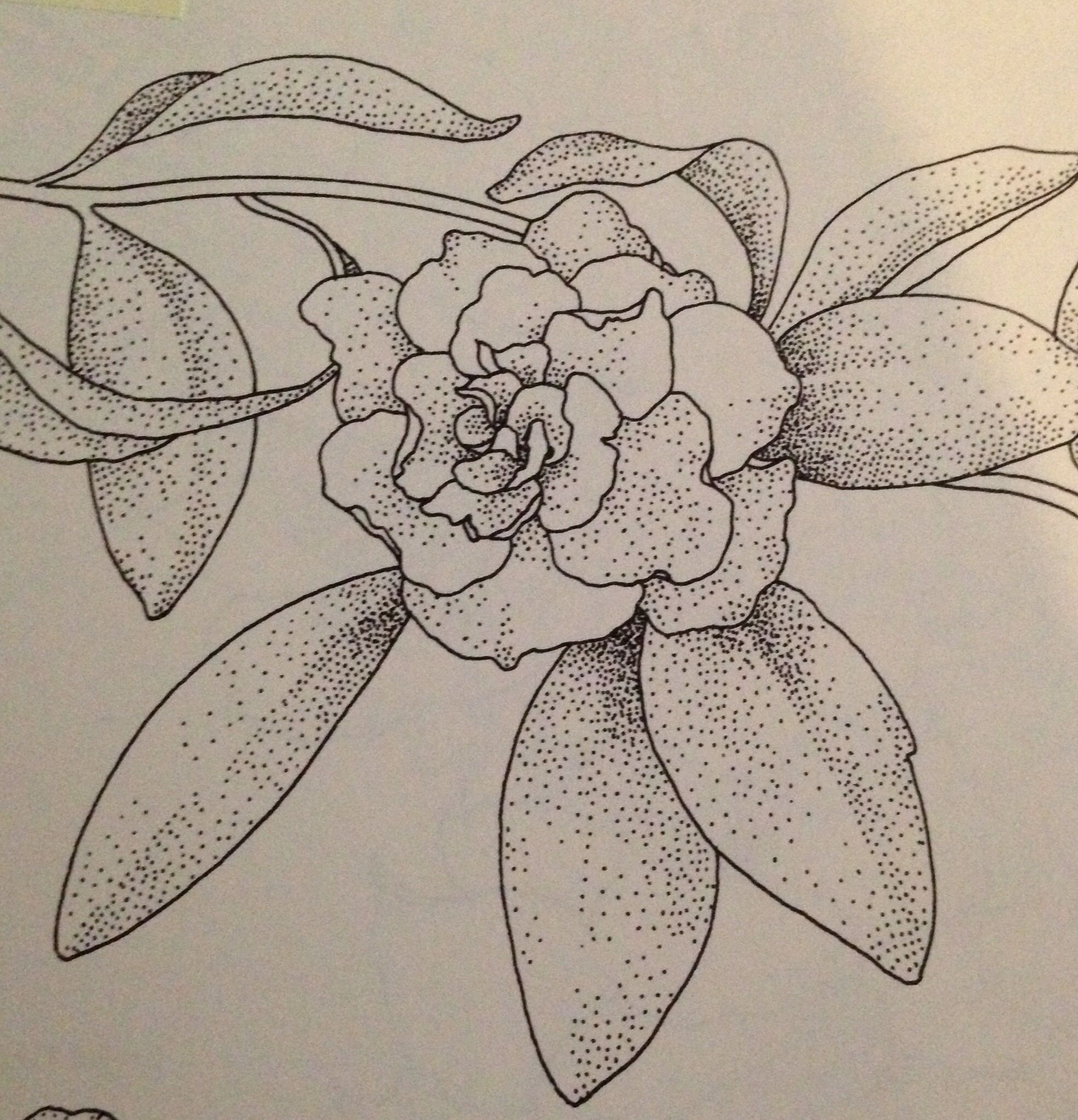 Gardenia, signifies joy, purity, secret love and is associated with thoughts of beauty. Drawn by me, endlesshopestudio