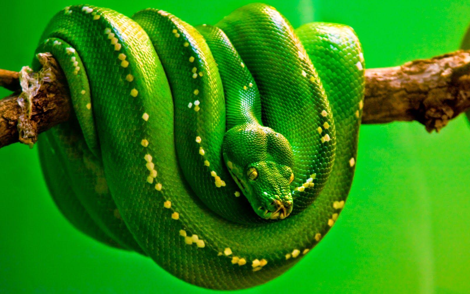 Beautiful snakes hd wallpapers free download desi girls - Hd wilderness wallpapers ...