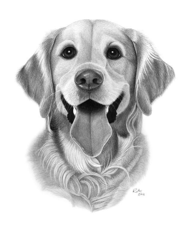 If You Can Draw All 8 Of These Things You Re A Sketching Superstar Hard Drawings Golden Retriever Drawing Dog Drawing
