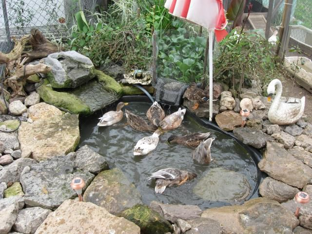 Building a pond step by step mostly complete post71 for Garden duck pond design