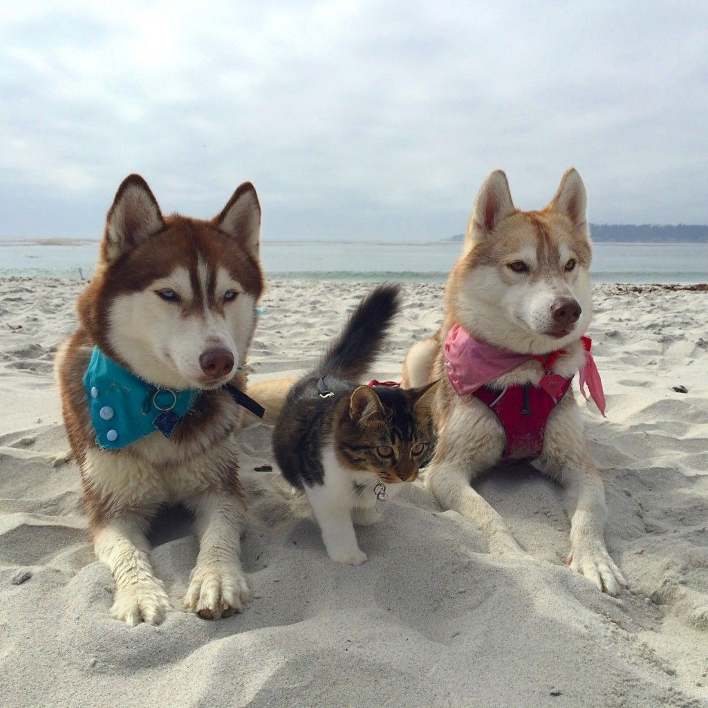 Meet The Cat That Runs With Dogs Dog Friends Dogs Kittens