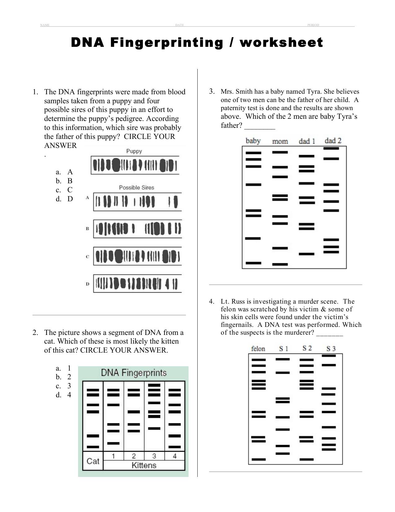 Dna Fingerprinting Worksheet Answers Em