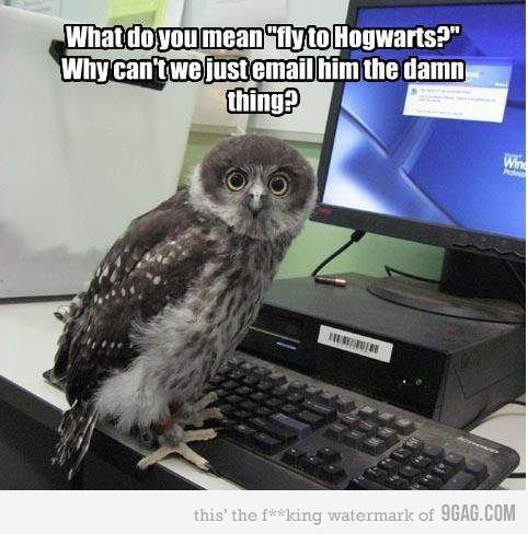 Poor Owls Harry Potter Funny Harry Potter Pictures Harry Potter Memes