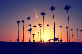 California Tumblr Photography Palm Trees