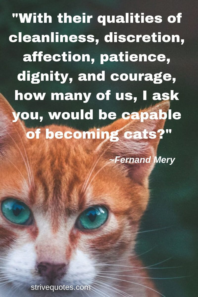 20 Funny Cat Quotes Sayings Images Strive Quotes Cat Quotes Funny Cat Quotes Funny Animal Quotes