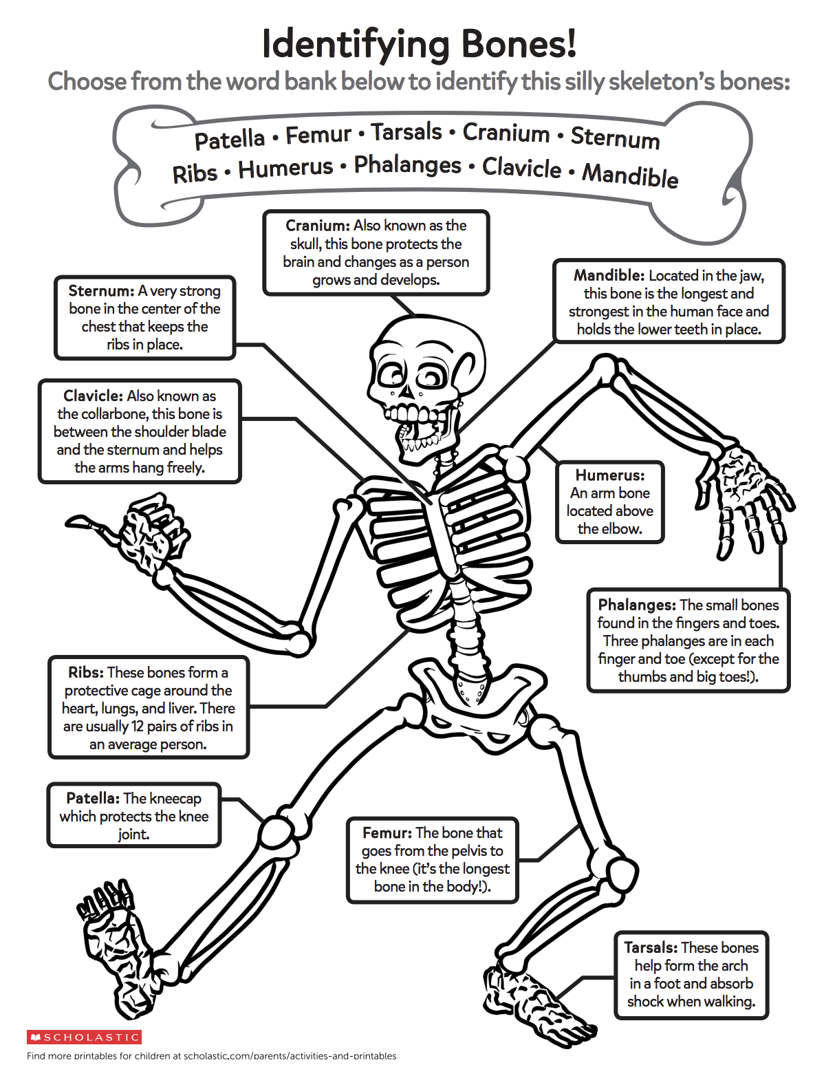 Help your child learn about growing bodies with this bone-identification  printable featuring a v…   Human body activities [ 1580 x 1214 Pixel ]