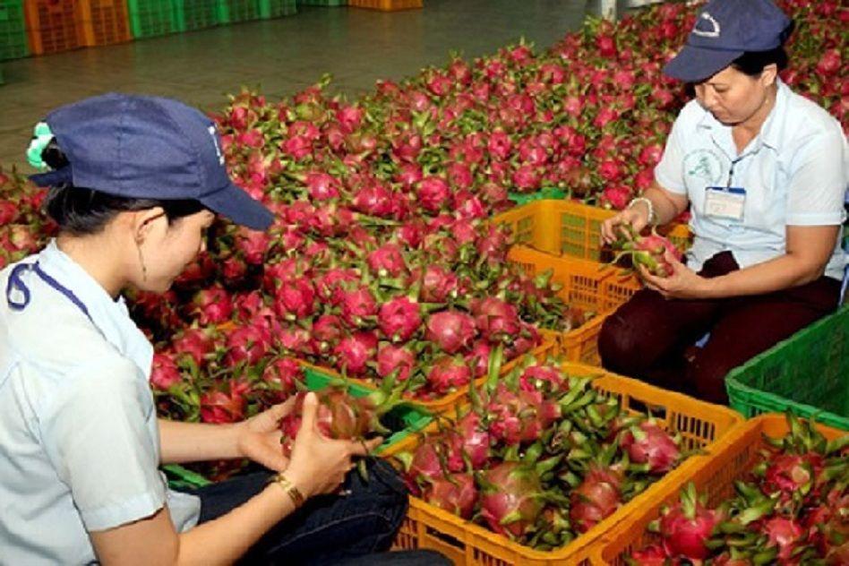 Cho thuê cung ứng lao động TPHCM uy tín và chất lượng Laos