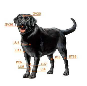 Dog Acupressure Chart Front | Horse Acupressure | Pinterest ...