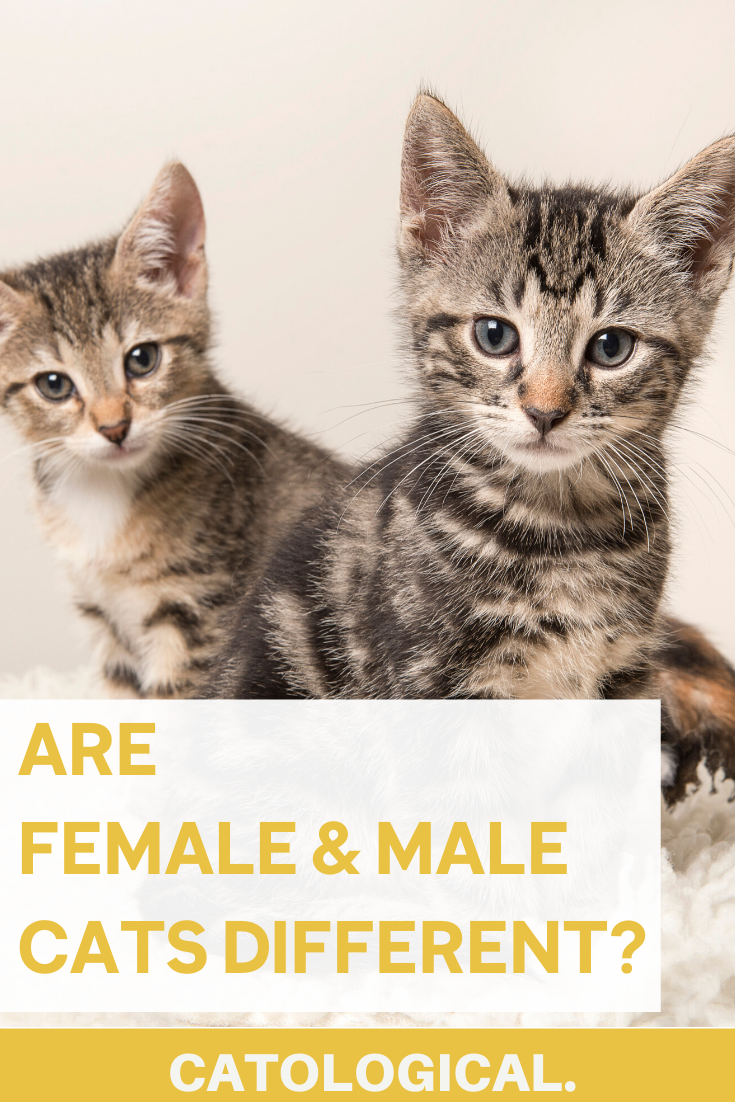 The Differences Between Male And Female Cats How To Tell Cat Genders In 2020 Cat Facts Funny Cat Parenting Cats