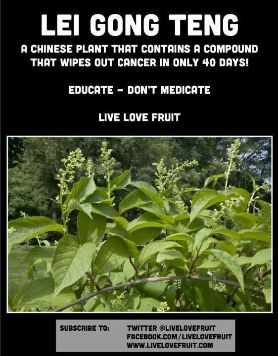 s-media-cache-ak0 | Natural ED Cure | Natural cancer cures