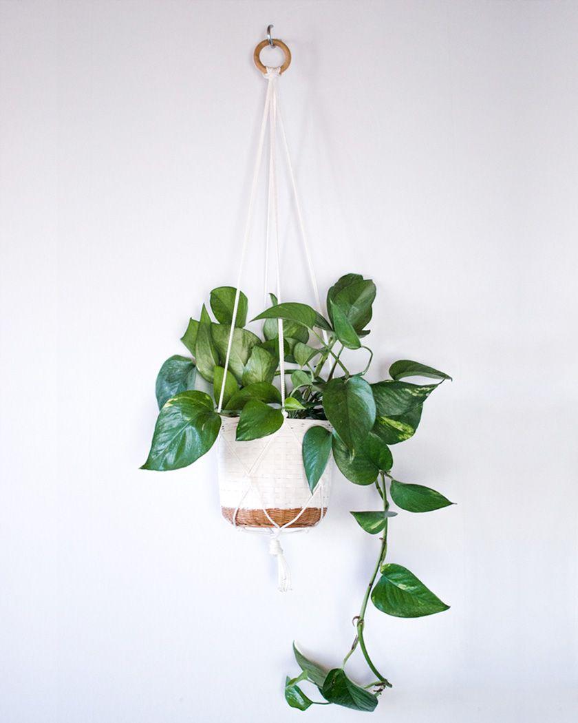 Diy Macrame Plant Hanger Simple White Rope Hanging Plants Indoor