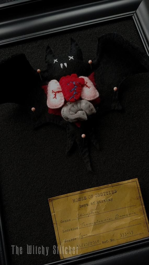 Finished Chiroptera Felt Anatomy Biology Gothic Creepy Cute Taxidermy Dissected Weird Bizarre Diy Bat Witchy Sch Cross