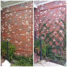 Remarkable Wire Trellis On Brick Wall Trellises Wire Trellis Lawn Garden Wiring Digital Resources Indicompassionincorg