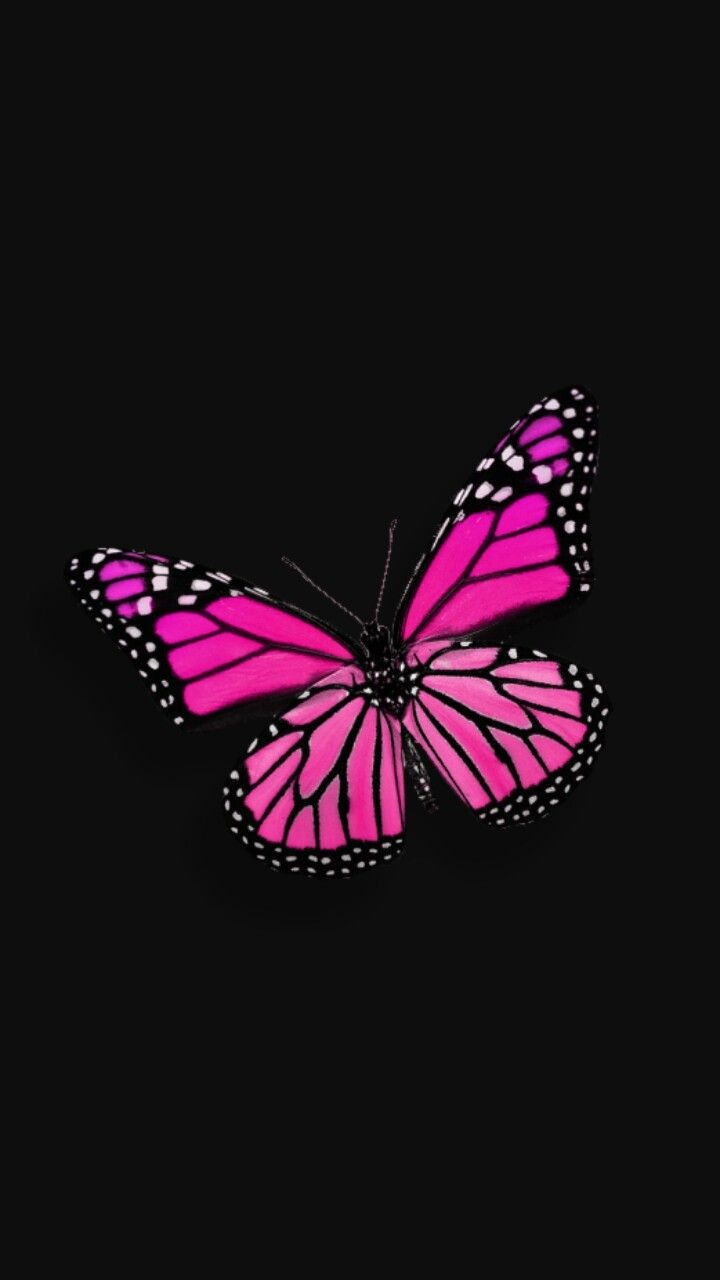 Black And Pink With Images Butterfly Wallpaper Iphone Pink