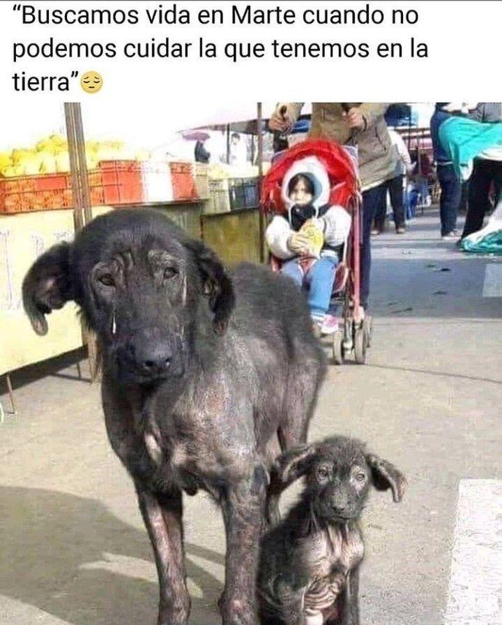 Pin De Naruka Uzumaki En Filosofia Animal Animales Frases Amor De Perro Cuidar Animales