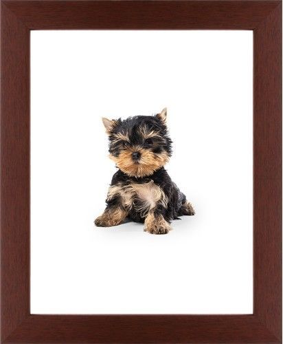 Terrier Puppy Framed Print, Brown, Contemporary, None, None, Single piece, 11 x 14 inches