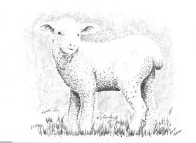 How to Draw Worksheets for Young Artist: How to Draw a Fuzzy Lamb Worksheet and lesson.