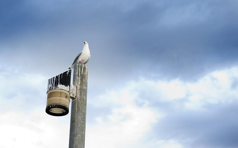 Seagull - Wallpaper set by heeeeman.deviantart.com