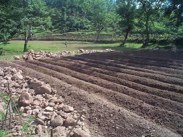 old house garden rows1.jpg (640×480)