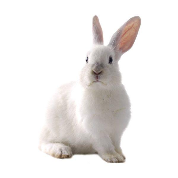 Tube Sirene Animals Animal Clipart Rabbit Cartoon Images