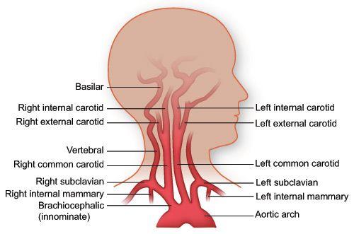 Pin On Anatomy Physiology
