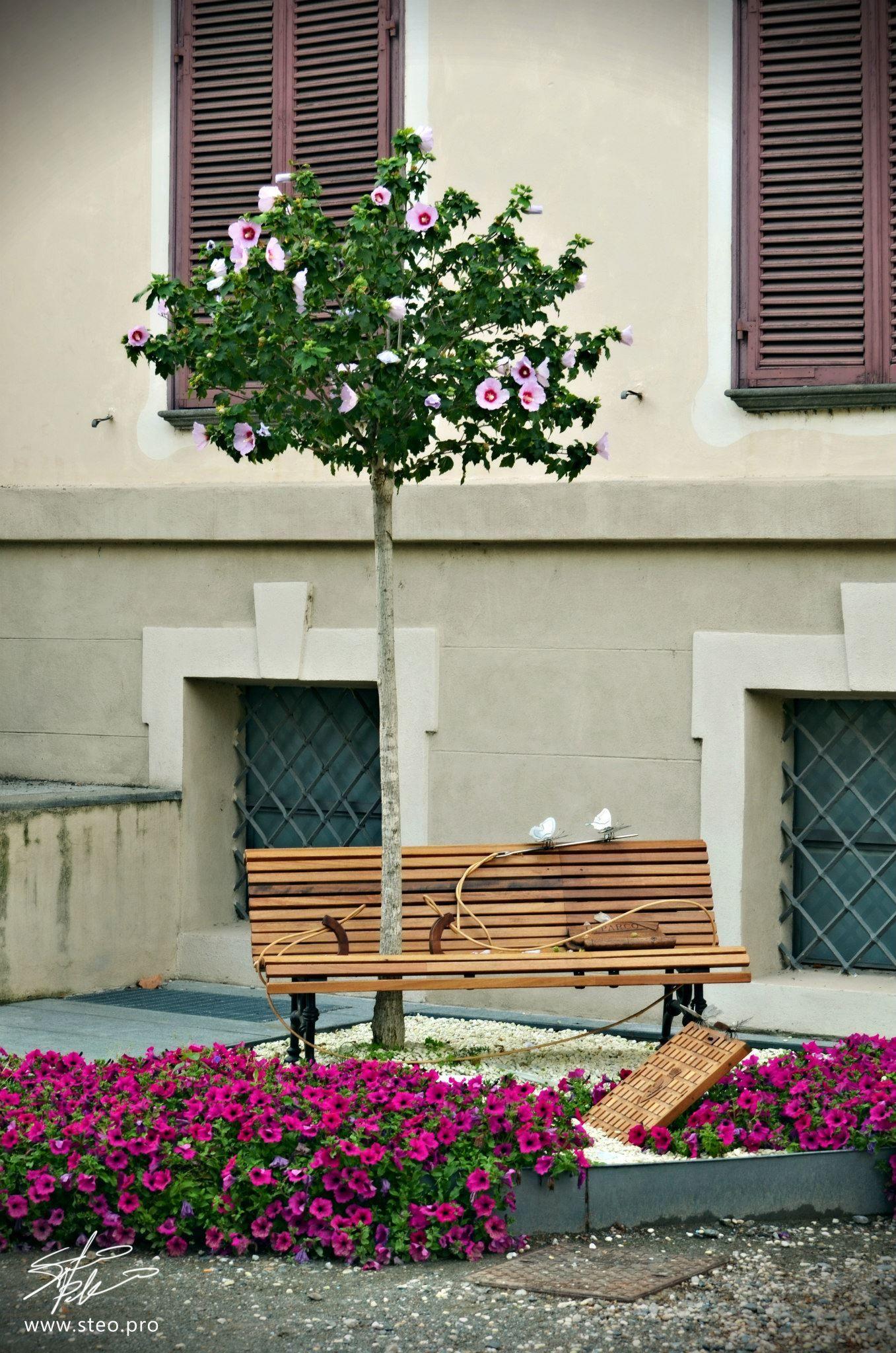 Lavoro Per Architetti Torino lavoro di rodolfo. parco rignon, torino natura prorompente