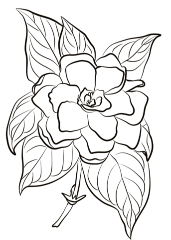 How To Draw A Gardenia : gardenia, Gardenia, Coloring, Category., Select, 26388, Printable, Crafts, Cartoons,, Na…, Pages,, Flower, Leather, Tooling, Patterns
