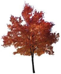 Ps Tree Panosundaki Pin