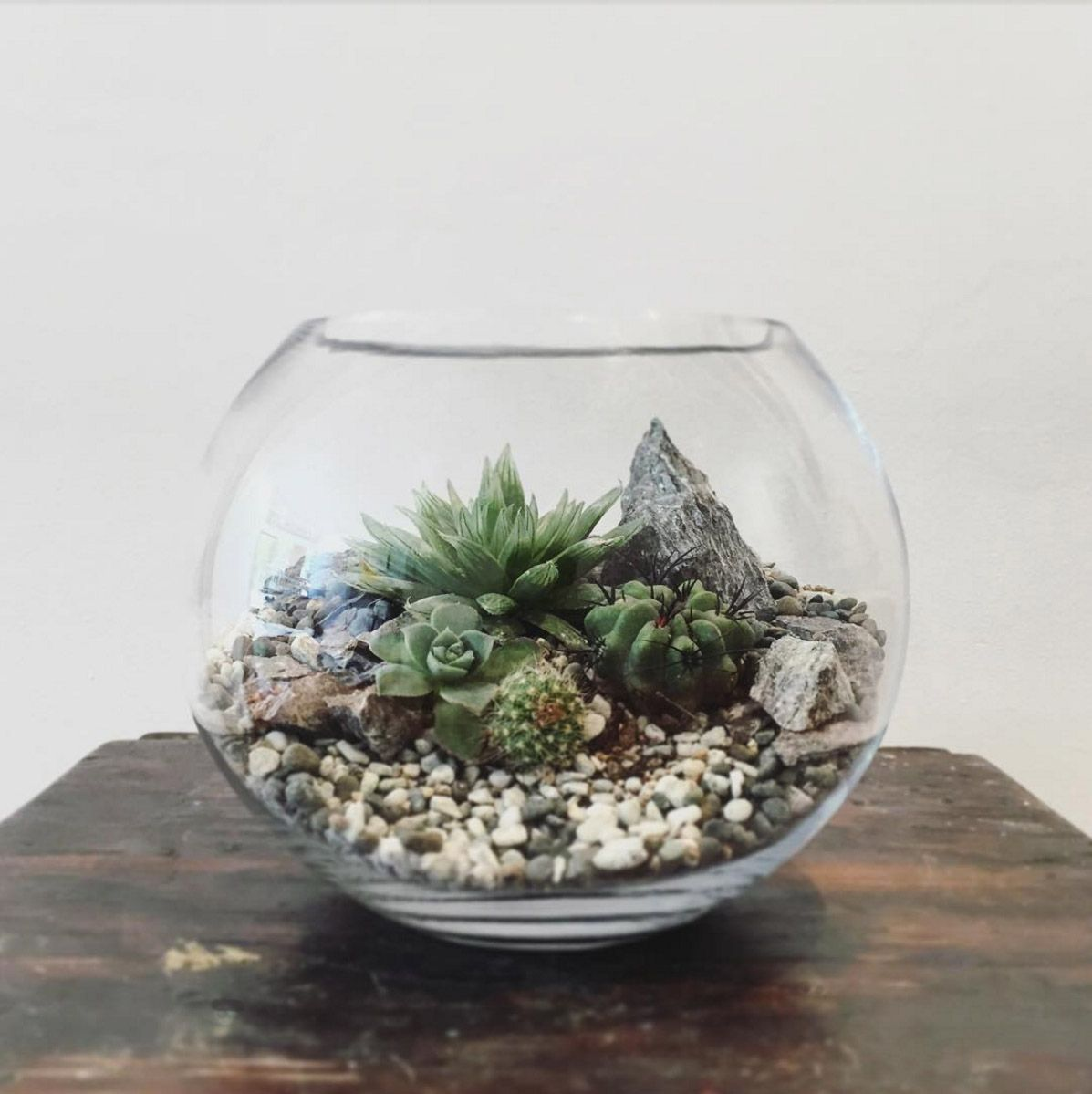 desert world terrarium small terraria cacti and deserts. Black Bedroom Furniture Sets. Home Design Ideas