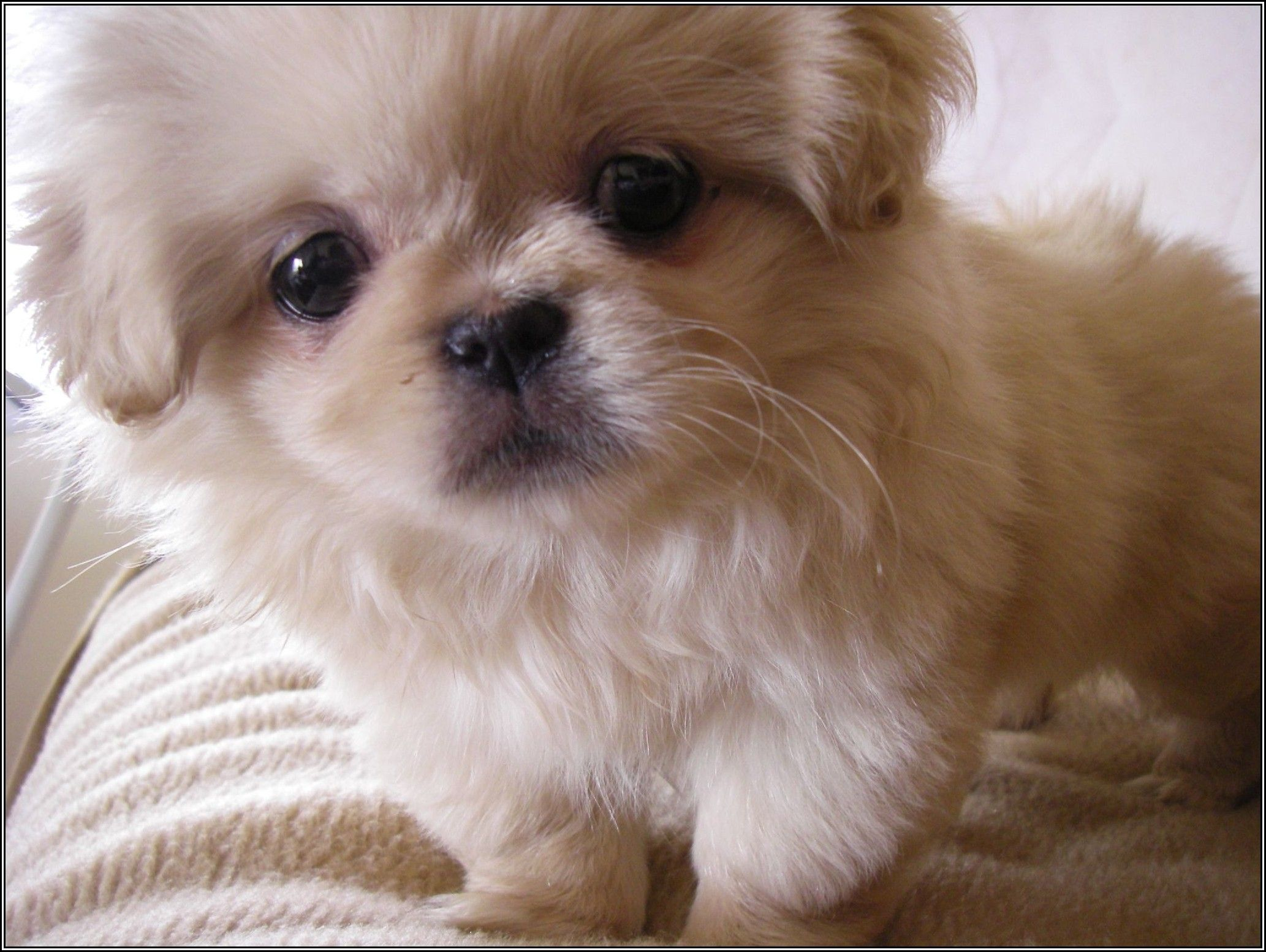 Cute Miniature Dog Breeds All About Information Breed