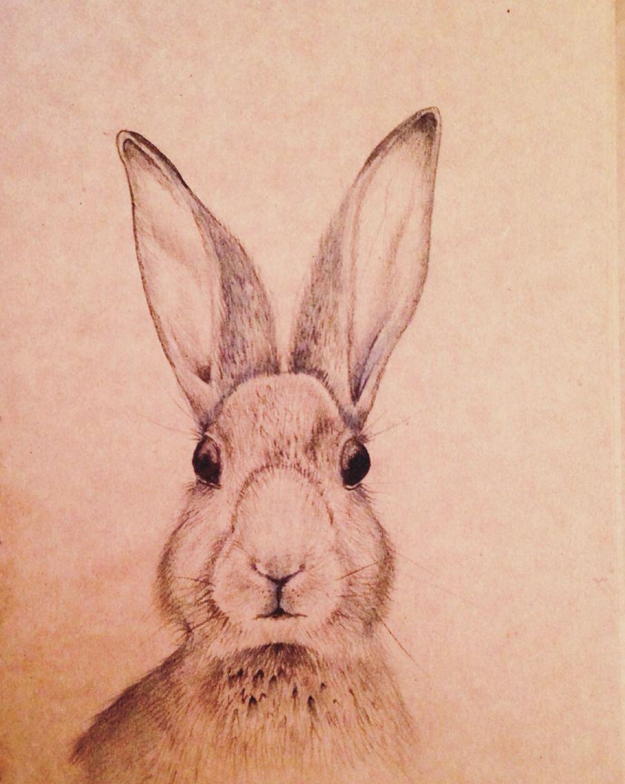 Rabbit pencil drawing on brown papaer | Rabbit drawing