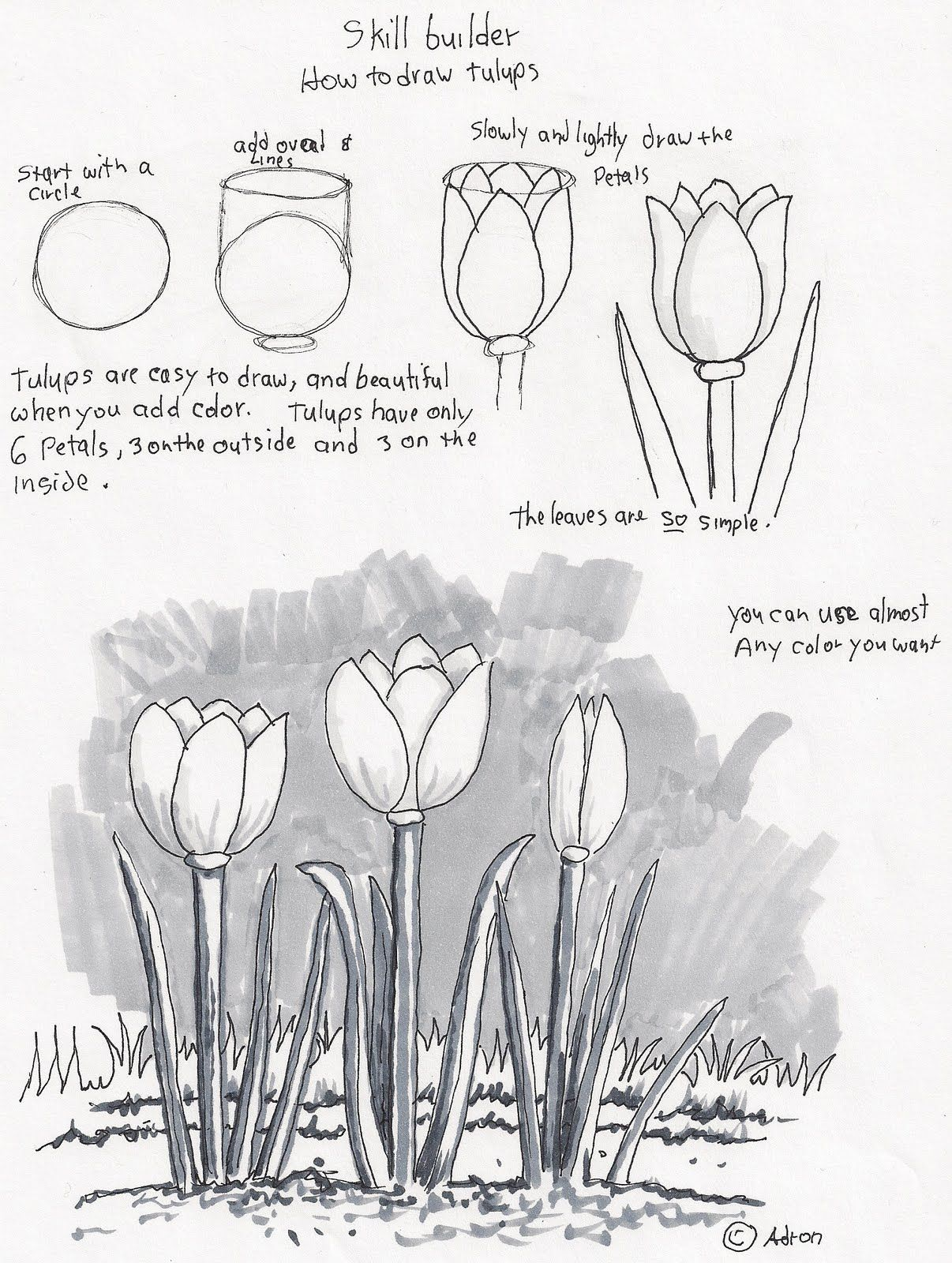 Adron's Art Lesson Plans: How To Draw Tulips, A Beginners Drawing Lesson
