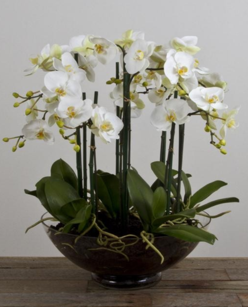 Phalaenopsis Orchid In Large Glass Vase Allissias Attic Vintage French Style Orchids Orchid Flower Arrangements Beautiful Orchids