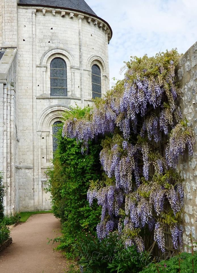 Wisteria by the Castle