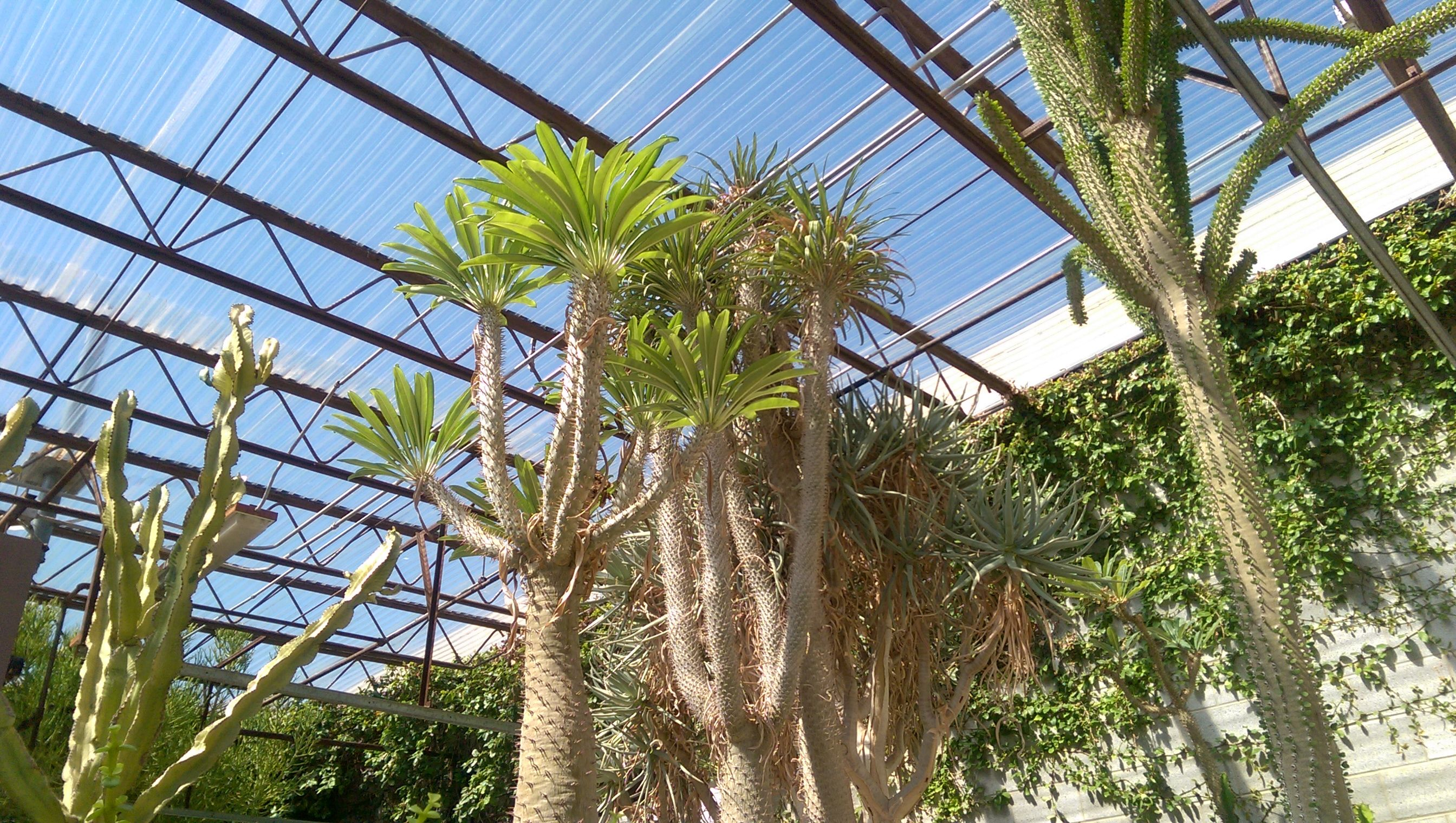 ef6fe082436df0c6108a5853de7f0f27 - Living Desert Zoo And Gardens Carlsbad Nm
