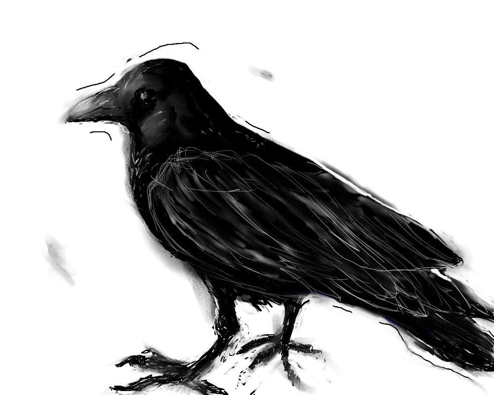 Нарисованные картинки ворон