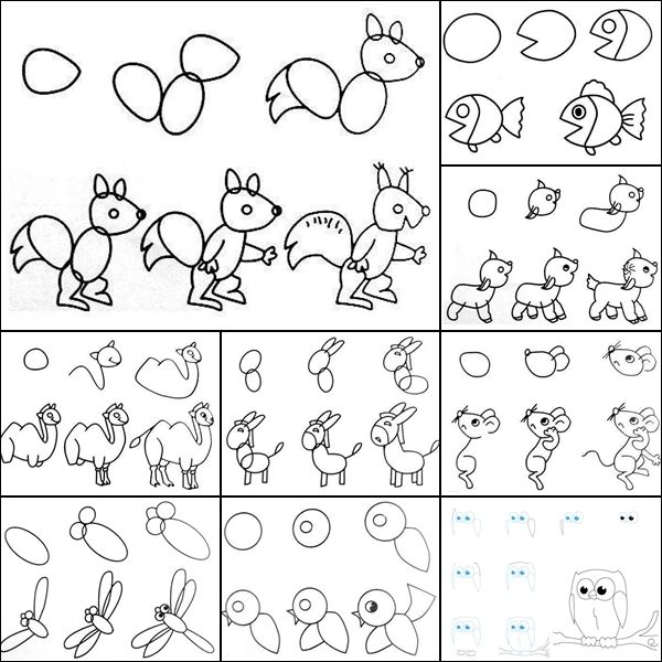 alberta animals how to draw step by step